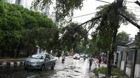 Pengendara menghindari pohon tumbang yang menutupi sebagian jalan di kawasan Cikini, Jakarta, Kamis (22/11). Pohon tumbang tersebut menyebabkan sejumlah pohon tumbang dan mengganggu arus lalu lintas. (Liputan6.com/Immanuel Antonius)