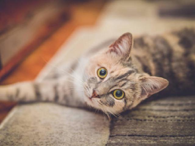 Jenis Kucing Yang Paling Cocok Kamu Pelihara Berdasarkan Zodiakmu Citizen6 Liputan6 Com