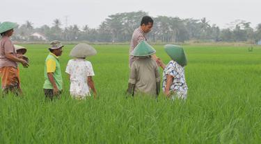 Perlu ada upaya untuk mendorong pengembangan pertanian yang lebih modern.