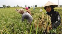 Neraca perdagangan pertanian Indonesia 2018 surplus 10 miliar dollar AS. (foto: dok. Kementan)