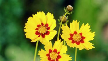 Ragam Bunga Indah Ini Bisa Mengundang Kupu Kupu Cantik Fashion