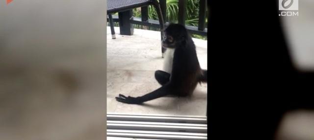 Dengan santainya seekor monyet masuk ke dalam kamar hotel dan mencuri buah. Aksi monyet ini lalu direkam oleh penghuni kamar hotel.