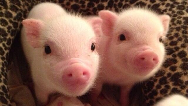 Terima Cangkok Kornea Mata Babi, Remaja Ini Bisa Melihat Lagi - Global  Liputan6.com