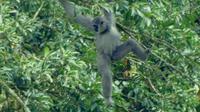 Siregol saat ini masih berstatus hutan lindung di bawah pengelolaan Perhutani Banyumas Timur, padahal mereka perlu menjadi kawasan konservasi untuk melindungi satwa langka. (Liputan6.com/Galoeh Widura)