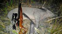Perburuan babi hutan atau celeng (Liputan6.com / Galoeh Widura)