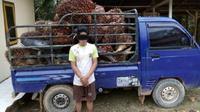 Seorang pelaku pencurian sawit milik perusahaan ditangkap polisi. (Foto: Dok Polda Jambi/B Santoso)