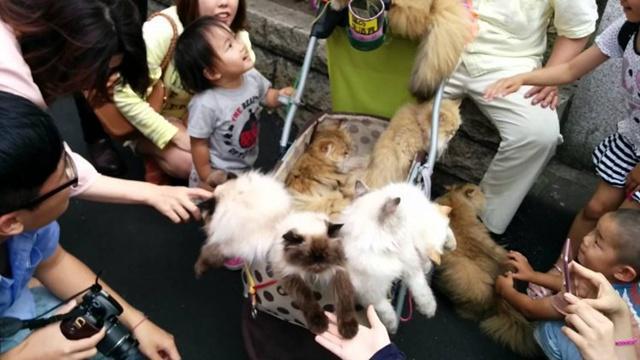 Banyak warga yang berfoto dengan kucing miliki Suga dan membelai bulu tubuh mereka | Photo: Copyright oddyticentral.com