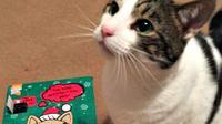 Seekor kucing mendapat kiriman barang lewat pos, tapi petugas pos enggan menyerahkannya tanpa adanya bukti identitas sang kucing.