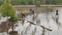 Pensiun dari Kapolri, Idham Aziz merevitalisasi lahan bekas tambak menjadi kebun mangrove di Kabupaten Konawe.(Liputan6.com/Ahmad Akbar Fua)