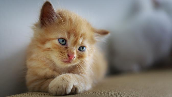 Kucing Mati Dapat Formulir Pendaftaran Pemilihan Presiden AS