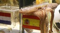 Seekor gurita yang diberi nama Paul menebak hasil final PD 2010 antara Belanda vs Spanyol di pusat akuarium laut Oberhausen, Jerman, 9 Juli 2010. AFP PHOTO/PATRIK STOLLARZ
