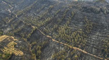 Penampakan Hutan di Turki Usai Kebakaran
