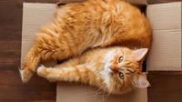 Ilustrasi kucing di kotak kardus.