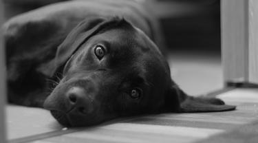 Anjingnya Hilang, Pria Ini Tawarkan Hadiah Tak Terduga Bagi Penemunya