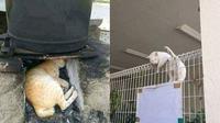 6 Lokasi Kucing Tidur Ini Tidak Biasa, Bikin Geleng Kepala (sumber: Instagram/wkwkland_real Twitter/dididikiu)