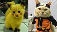 6 Potret Lucu Kucing Cosplay Anime Ini Bikin Ngakak (sumber: 1cak dan Twitter/usingcloath5)