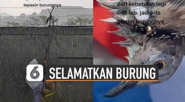 Aksi heroik ditunjukkan oleh seorang perempuan yang menyelamatkan seekor burung tersangkut di pagar kawat.
