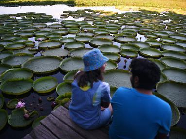 Orang-orang mengamati bunga lili raksasa (Victoria cruziana) di Sungai Paraguay, di Piquete Cue, utara Asuncion, pada Minggu (18/4/2021). Bunga lili raksasa tersebut muncul setiap tiga sampai empat tahun dalam jumlah dan ukuran yang besar. (Norberto DUARTE / AFP)