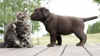Dalam Bintang 5 kali ini ada informasi tentang hewan dengan kemampuan kamuflase terbaik, sumur angker, dan anjing vs kucing. (Foto: lifehack.org)