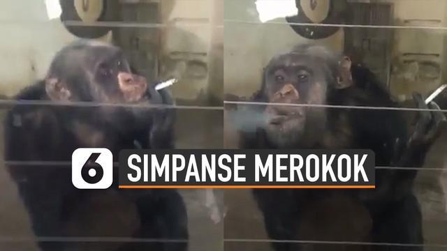 Aksi tidak terpuji dilakukan oleh pengunjung ketika menaruh rokok di sela-sela kaca simpanse. Hal itu membuat simpanse menghisap rokok pemberian pengunjung.