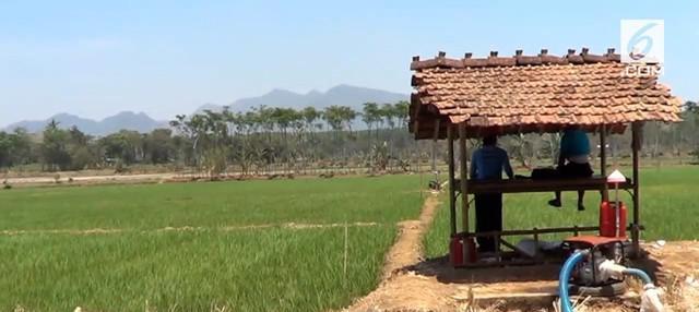 Petani di Pati, Jawa Tengah mendukung sikap Dirut Bulog, Budi Waseso. Mereka menolak kebijakan pemerintah yang akan melakukan impor beras.