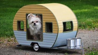 Rumah Unik Dan Lucu Buat Anjing Peliharaan Fashion Fimela Com