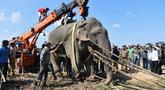Gajah liar yang dijuluki Osama bin Laden diangkat menggunakan crane saat diangkut di Divisi Hutan Rongjuli, Distrik Goalpara, Assam, India, Selasa (12/11/2019). Osama bin Laden ditangkap setelah menginjak mati lima warga desa akhir Oktober lalu. (Biju Boro/AFP)