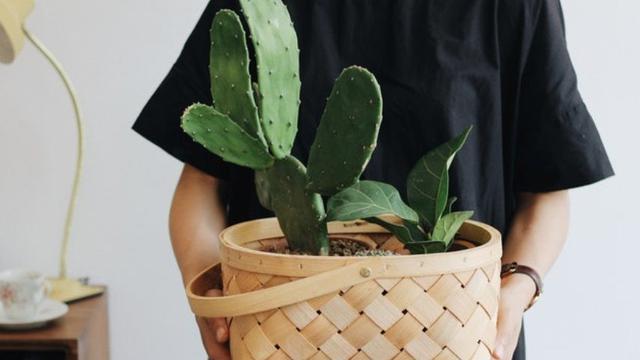 Tuntaskan Kulit Wajah Kering dengan Kaktus, Berani Coba?