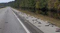 Ribuan bangkai ikan tergeletak mati di jalanan negara bagian North Carolina, AS akibat terjangan badai Florence (AFP)