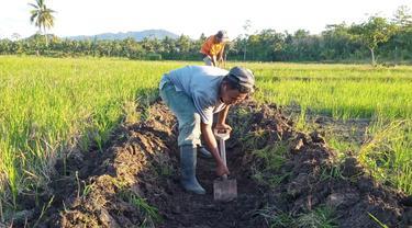 Rehabilitasi Jaringan Irigasi Tersier, Kementan Stabilkan Masa Tanam Petani Buton Utara