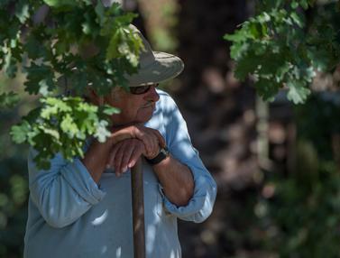 20170106-Presiden-Termiskin-Uruguay-Jose-Mujica-AFP