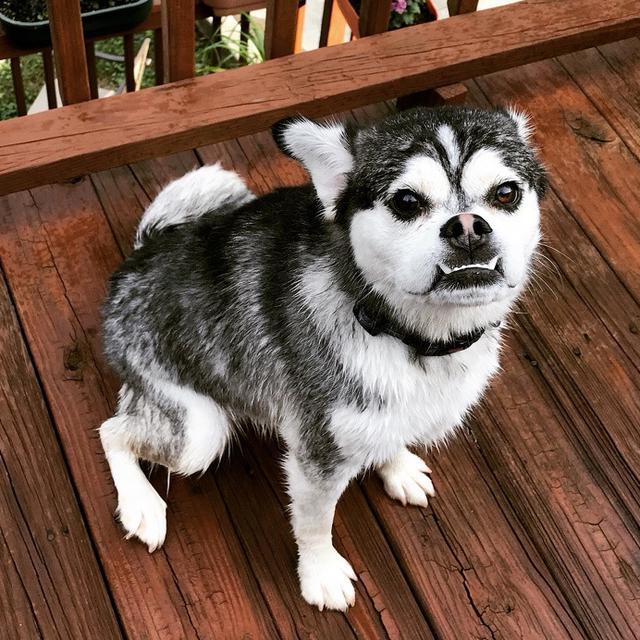 6 Potret Anjing Dari Perkawinan Beda Ras Ini Lucu Banget Hot Liputan6 Com
