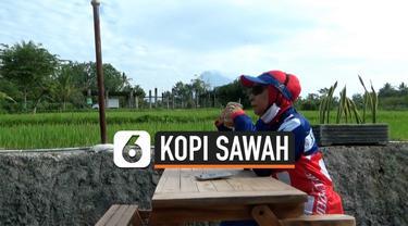 kopi sawah thumbnail