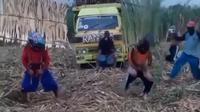 Aksi para petani yang menggelar pertunjukan reog di tengah ladang tebu (dok.instagram/@infoponorogo/https://www.instagram.com/p/CRQ6InjAmVa/Komarudin)