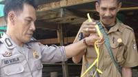 Anak babi hutan saat dibawa ke kantor polisi (Fauzan/Liputan6.com)