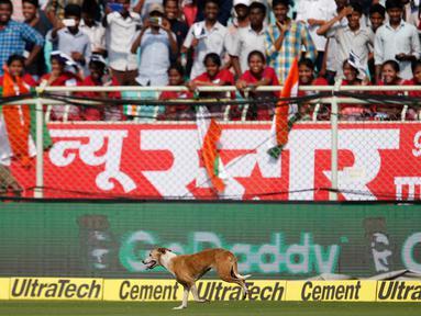 Pertandingan kriket sedang berlangsung ketika anjing liar tiba-tiba berlari masuk lapangan saat India unggul dengan skor 210-2 atas Inggris di Visakhapatnam, Andhra Pradesh, India pada 17 November 2016 silam.  (AP Photo/Aijaz Rahi)