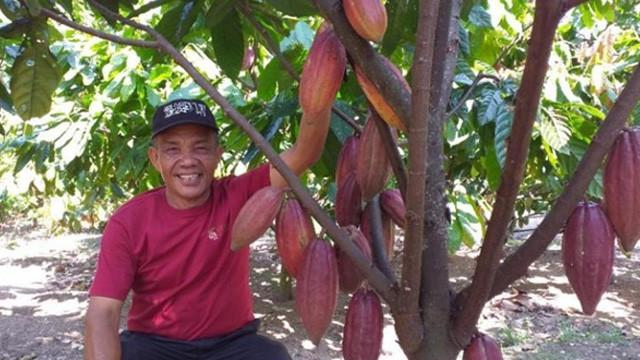 Hadapi Perubahan Iklim, Petani Kakao Bisa Terapkan 6 Strategi Ini