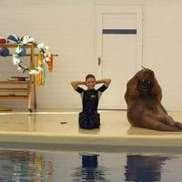 Pintar banget! Anjing laut ini bisa ikuti gerakan olahraga.