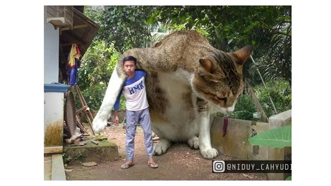 5 Editan Foto Kucing Raksasa Ini Kocak Banget - Hot Liputan6 com