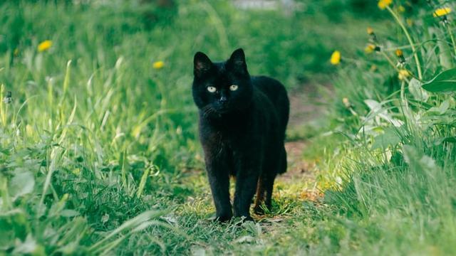 30 Nama Lucu Kucing Jantan Mudah Diingat Dan Menggemaskan Ragam Bola Com