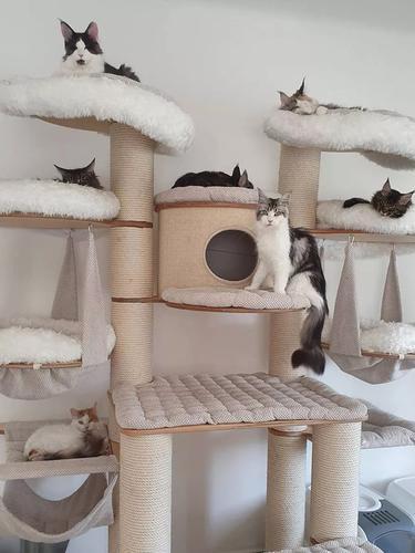 5 Ide Pohon Kucing yang Cantik dan Menakjubkan untuk Peliharaan Kesayangan