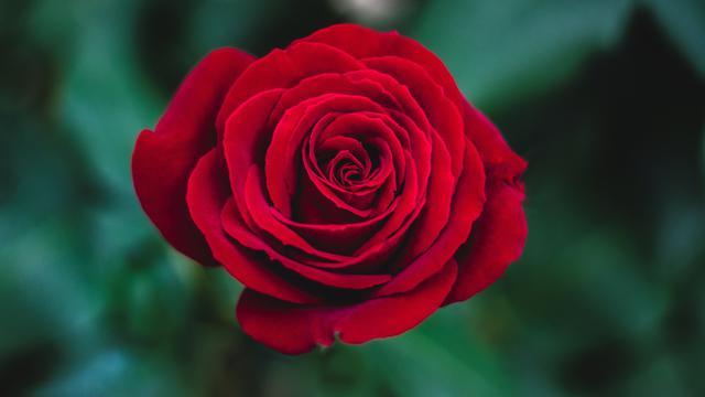 Jangan Salah Pilih Ketahui 5 Makna Bunga Yang Perlu Kamu Tahu