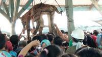 Harimau sumatera mati ditombak dan bangkainya digantung di salah satu tempat, oleh warga setempat disebut sopo.