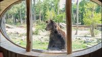 Salah satu pemandangan yang bisa ditemui para tamu di Pairi Daiza Resort, Belgia. (dok. Instagram @pairidaizaofficial/https://www.instagram.com/p/CCgY0MooSlM/Dinny Mutiah)