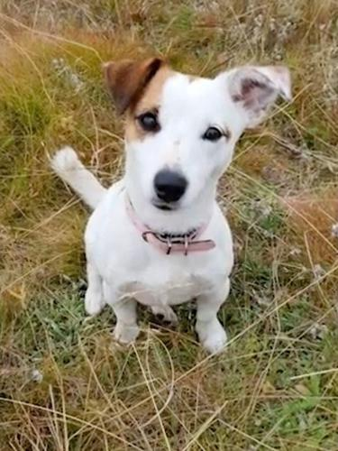 Aksi Heroik Anjing Rela Mati Demi Selamatkan Pemiliknya dari Serangan Serigala