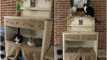 desain rumah kucing dalam rumah