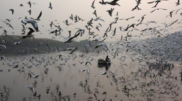 Pria India memberi makan burung camar di sungai Yamuna yang diselimuti kabut, Jumat (17/11). WHO menyebut kadar polusi udara di New Delhi dan sebagian wilayah utara India lainnya telah jauh di atas batas yang bisa di toleransi. (DOMINIQUE FAGET/AFP)