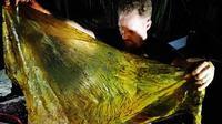Ilmuwan melihat lembaran sampah plastik yang berhasil dikeluarkan dari seekor paus terdampar di Filipina (AP Photo)