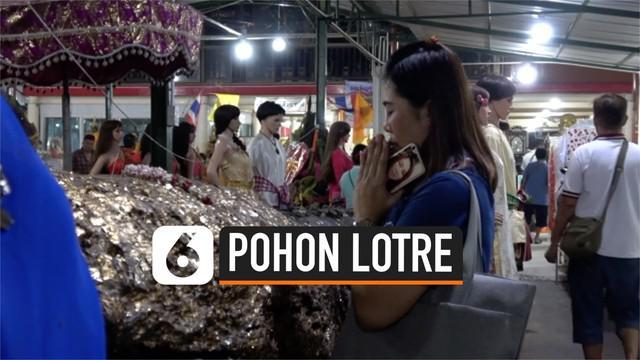 Penduduk thailand berbondong-bondong mengunjungi kuil setiap bulan untuk menyembah pohon Horea Odorata. Pohon keramat ini dipercaya penuh dengan keberuntungan, salah satunya untuk memenangkan lotre.