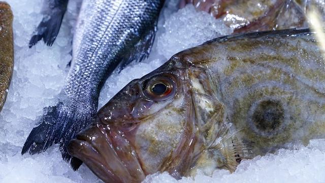 8 Manfaat Ikan Dori bagi Kesehatan, Kaya Nutrisi - Hot Liputan6.com